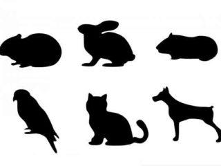 Diferencias entre zootecnia y veterinaria