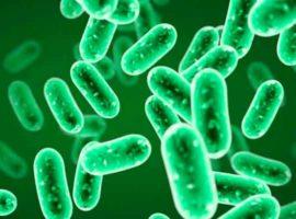 Diferencias entre bacterias y arqueas