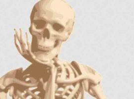 ¿De qué está formado el esqueleto?
