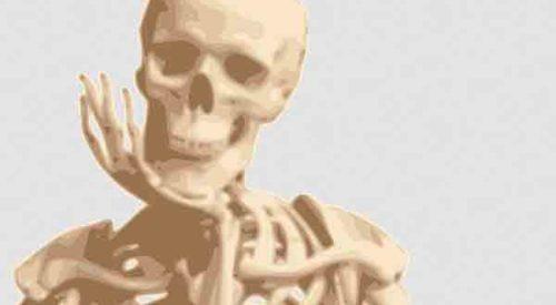 De qué está formado el esqueleto? | El Mundo Infinito