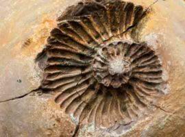 ¿Qué es un fósil y cómo se forma?