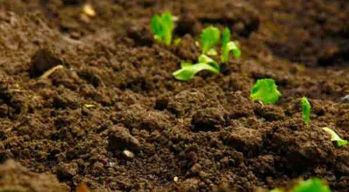 Tipos de suelo el mundo infinito for Clausula suelo con acuerdo firmado