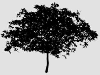 ¿Qué son los componentes naturales?