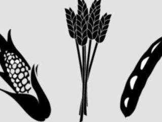 ¿Qué hace un ingeniero agronomo?